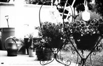 Jersey's garden