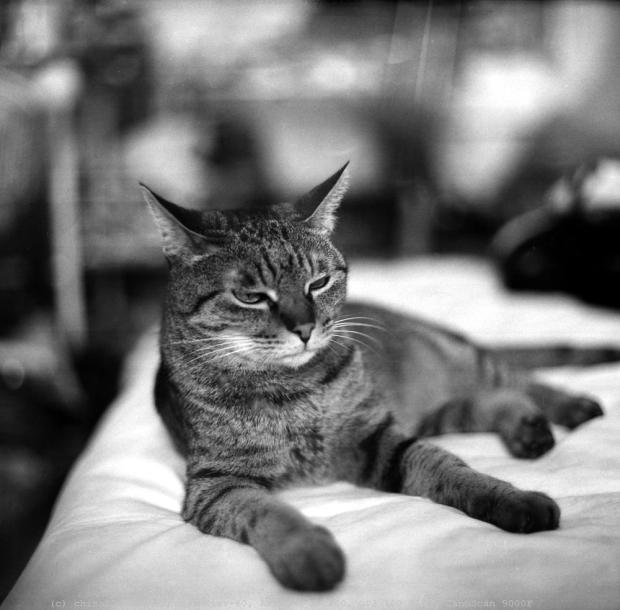 samba kitty