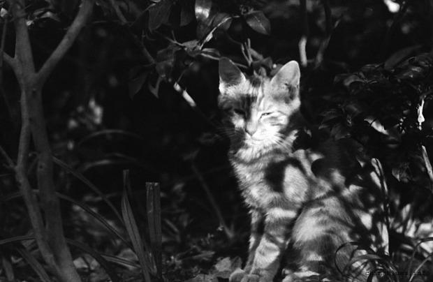 Met a cat - in the bush