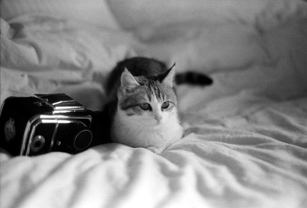 Tango calico cat with Kiev-88