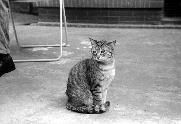 Lovely tabby cat