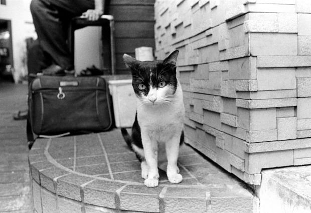 Stret cat